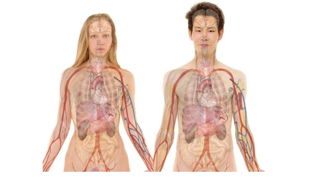 vanessa-lopez-blog-naturopathie-cure-detox-drainage-organes-emonctoires