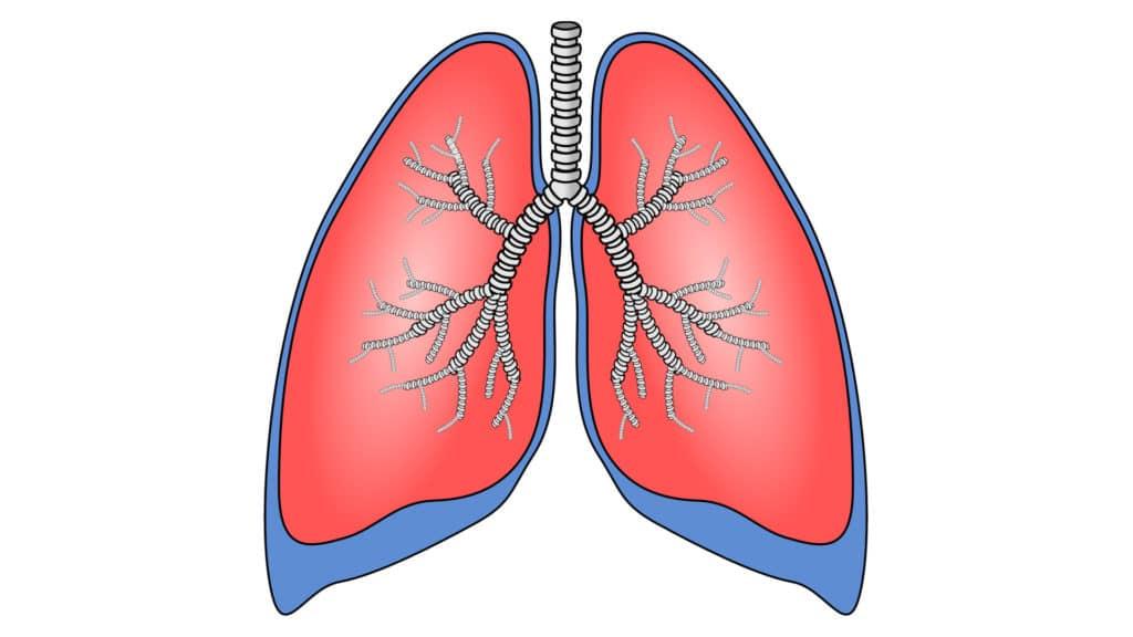 vanessa-lopez-blog-naturopathie-cure-detox-drainer-emonctoire-poumon