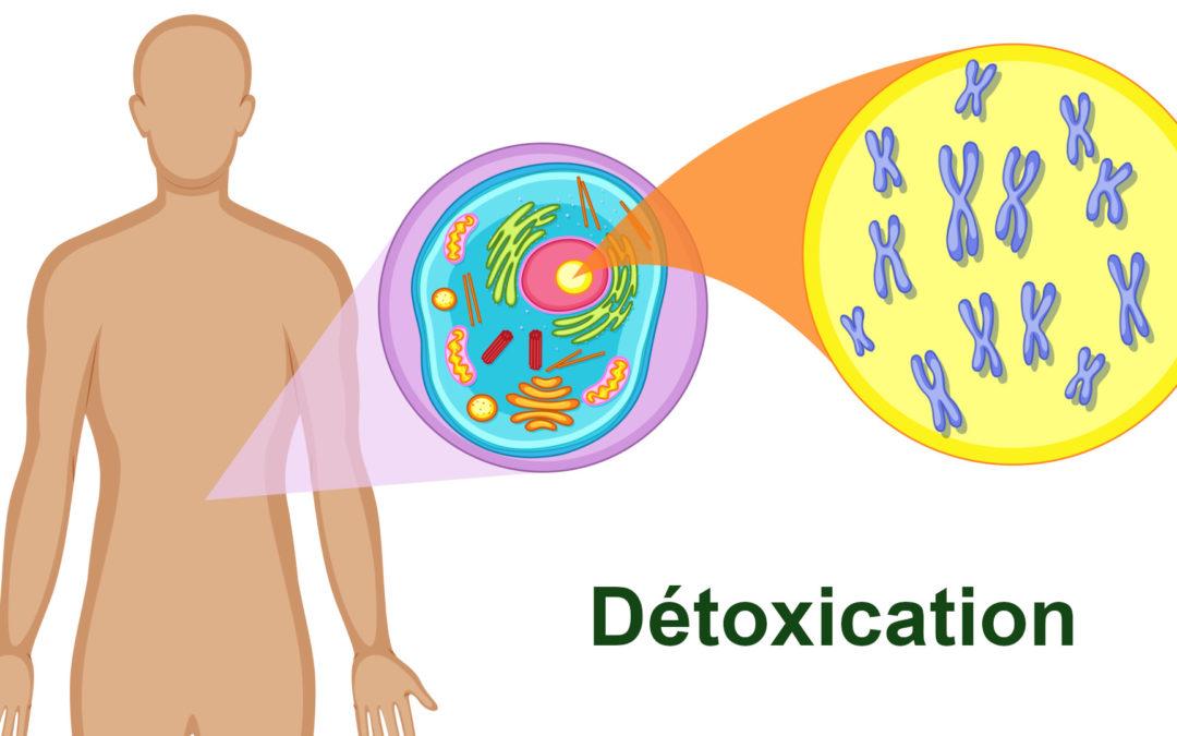 Mauvaise détoxication : causes de l'encrassement du corps et des maladies