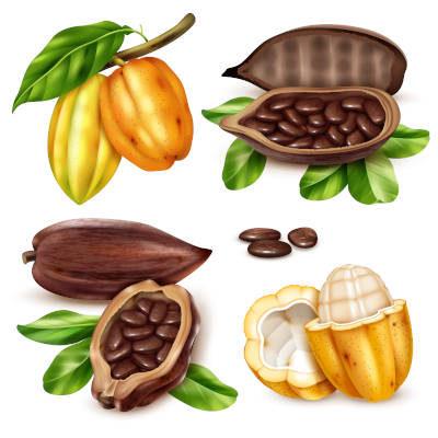Cacao riche en magnésium